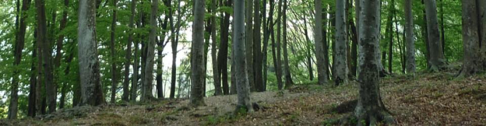 bosco-di-faggi